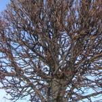 Medžių priežiūra (arboristika)