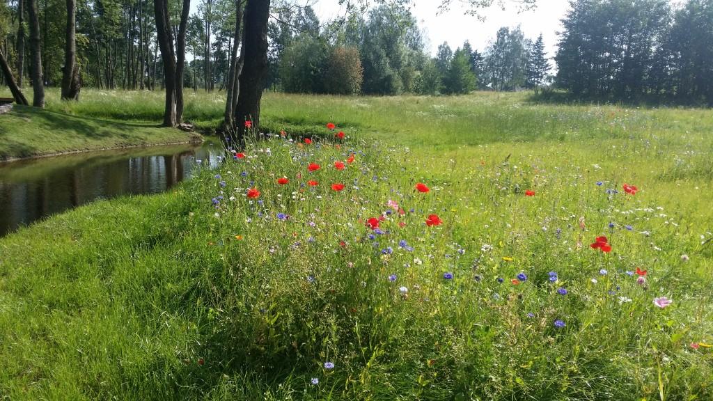 Gėlių pieva prie upelio