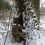 Drevė kamiene