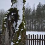 Kamiene didelė drevė