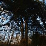 Vilkėnų parko cūga